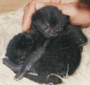 Katzenbaby